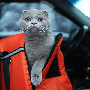 9 Tips for Moving Cross Country with Cats