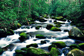 Roaring Fork River, Great Smoky Mountains, Tennessee